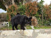 De twee katten zijn zeer comfortabel royalty-vrije stock foto's