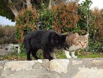 De twee katten zijn zeer comfortabel stock foto's