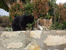De twee katten zijn zeer comfortabel stock afbeeldingen