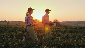 De de twee landbouwersman en vrouw lopen langs het gebied, die dozen met verse groenten dragen De organische landbouw en familie royalty-vrije stock foto's