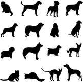 De twee populairste huisdieren - honden en katten Royalty-vrije Stock Foto's