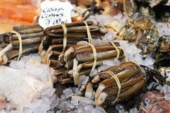 De tweekleppige schelpdieren van het scheermes royalty-vrije stock foto