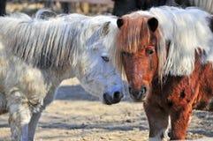 De tweeling van de poney Stock Afbeeldingen