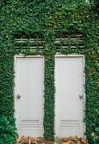 De tweeling van witte deuren, met groen doorbladert, installatie Stock Afbeelding