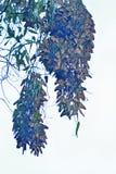 De Tweelingcluster van de monarchvlinder royalty-vrije stock afbeeldingen