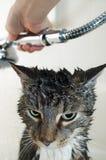 De tweemaandelijkse douche van de kat stock fotografie