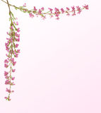 De twijg van de heide met roze bloemen Royalty-vrije Stock Foto's