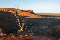De typische Australische Scène van het Binnenland (de Canion van de Koning) Royalty-vrije Stock Fotografie