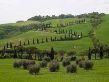 De typische weg van Toscanië Stock Foto