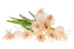 De uien van de lente Stock Fotografie