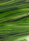 De uien van de lente Royalty-vrije Stock Afbeelding