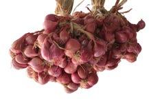 De uien van de sjalot in een groep Royalty-vrije Stock Afbeeldingen