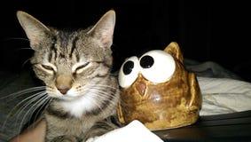 De uil en pussycat stock afbeeldingen