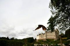 De uil tijdens een vlucht in Schotland toont op de achtergrond een kasteel royalty-vrije stock afbeelding
