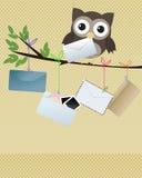 De uil u kreeg post Stock Fotografie