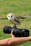 De uil van de schuur op een camera royalty-vrije stock foto