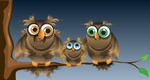 De uilen van de familie Royalty-vrije Stock Foto