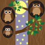De uilen van de familie bij nacht Stock Foto