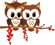 De uilen van de valentijnskaart Stock Foto's