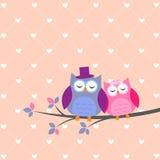 De uilen van het paar in liefde Stock Afbeelding