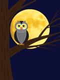 De zitting van de uil op een tak van boom Stock Foto's