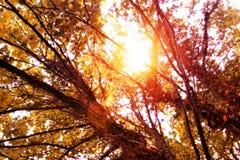 De uitbarstingen van de de herfstzon door bomen royalty-vrije stock foto's