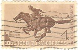 De Uitdrukkelijke Zegel van de poney Royalty-vrije Stock Foto