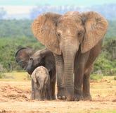 De uitdrukkingen van de olifant. stock foto's