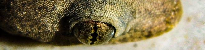 De uiterst kleine gekko die in mijn keuken leefde stock foto