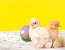 De uiterst kleine kuikens van Pasen met hand schilderden Paaseieren Stock Afbeeldingen