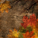 De uitstekende achtergrond van de herfst Stock Afbeeldingen