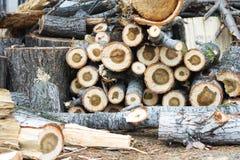 De uitstekende achtergrond van de houtsnedenaard Royalty-vrije Stock Foto