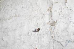 De uitstekende achtergrond van de pleister gele geschilderde muur Royalty-vrije Stock Afbeelding
