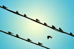 De uitstekende Achtergrond van Vogels Stock Foto