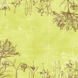 De uitstekende Botanische Achtergrond van het Document Florals Royalty-vrije Stock Afbeeldingen
