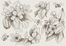 De uitstekende botanische bloemen van de illustratiebloesem met bijen Stock Foto's