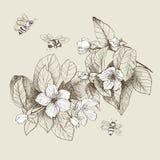 De uitstekende botanische bloemen van de illustratiebloesem met bijen Royalty-vrije Stock Afbeelding
