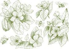 De uitstekende botanische bloemen van de illustratiebloesem met bijen Royalty-vrije Stock Afbeeldingen