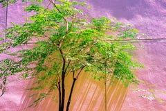 De uitstekende groene boom isoleert pastelkleur aan Creatief patroon royalty-vrije stock foto's