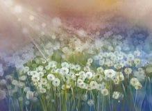 De uitstekende installatie van olieverfschilderijbloemen Wild bloemgebied stock illustratie