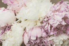 De uitstekende Pioen bloeit Achtergrond Royalty-vrije Stock Afbeelding