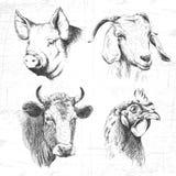 De uitstekende reeks van landbouwbedrijfdieren, vector Stock Afbeeldingen