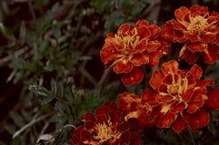 De uitstekende Rode Bloemen Retro Herfst stock afbeeldingen