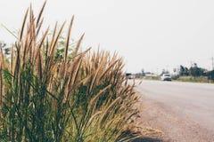 De Uitstekende Stijl van de graswegkant Stock Afbeelding