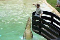De Uitvoerder van de Krokodil van de Dierentuin van Australië Stock Fotografie