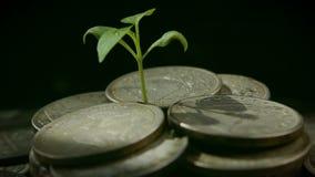 De um punhado das moedas a planta cresce, o conceito do bem estar crescente vídeos de arquivo
