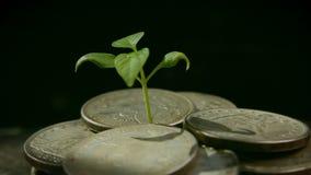 De um punhado das moedas a planta cresce, o conceito do bem estar crescente video estoque