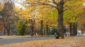 De Universiteit van Hokkaido bij dalingsseizoen stock video