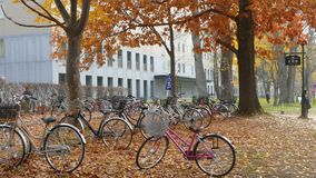 De Universiteit van Hokkaido bij dalingsseizoen stock videobeelden
