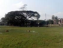 De universiteit van Noakhalizilla Royalty-vrije Stock Foto